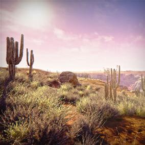 Semi-Arid Desert Environment
