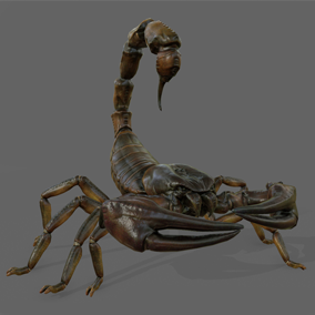 Here is a deadly giant scorpion. This monster can break your bones in no time with its powerful claws and even the greatest armors can't resist its lethal stinger!
