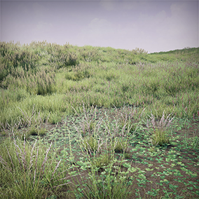 Photorealistic pack grass. Suitable for the creation of large fields, lawns, forest glades.
