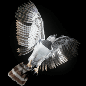 This is a semi realistic 3D model and animations of a 