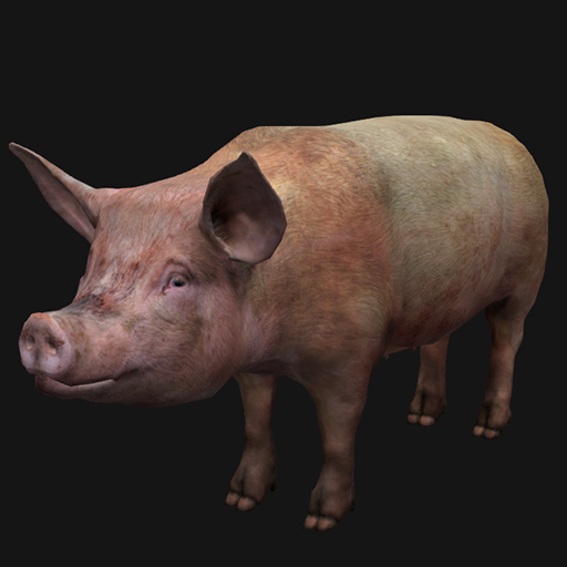 Realistic pig model. Model has 3 version lods, 4 version diffuse maps and 20 animations.