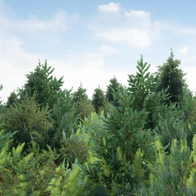 A pack of 432 various pine bushes, animated and ready-to-use with Foliage mode.