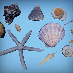 12 photoscanned seashells and starfishes for your scene!