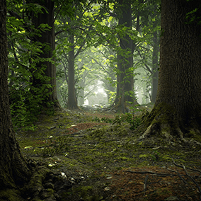 All assets you need to build a photorealistic broadleaf forest. High resolution models and textures of trees, rocks, debris, plants and more. All materials a highly tweakable and can be customized easily with new textures to fit project specific needs.