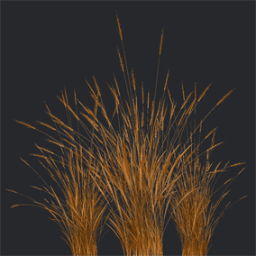 A foliage pack that contains many different species of grass for a great value.