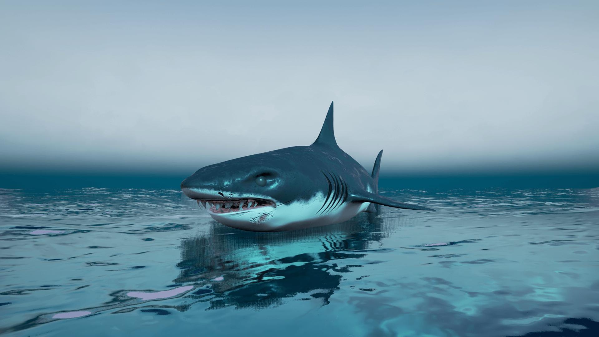 Картинки черные акулы