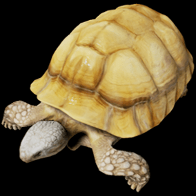 This is a semi realistic model and animations of a Sulcata (African spurred tortoise).