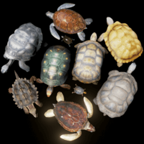 Models and animations of turtles and tortoises