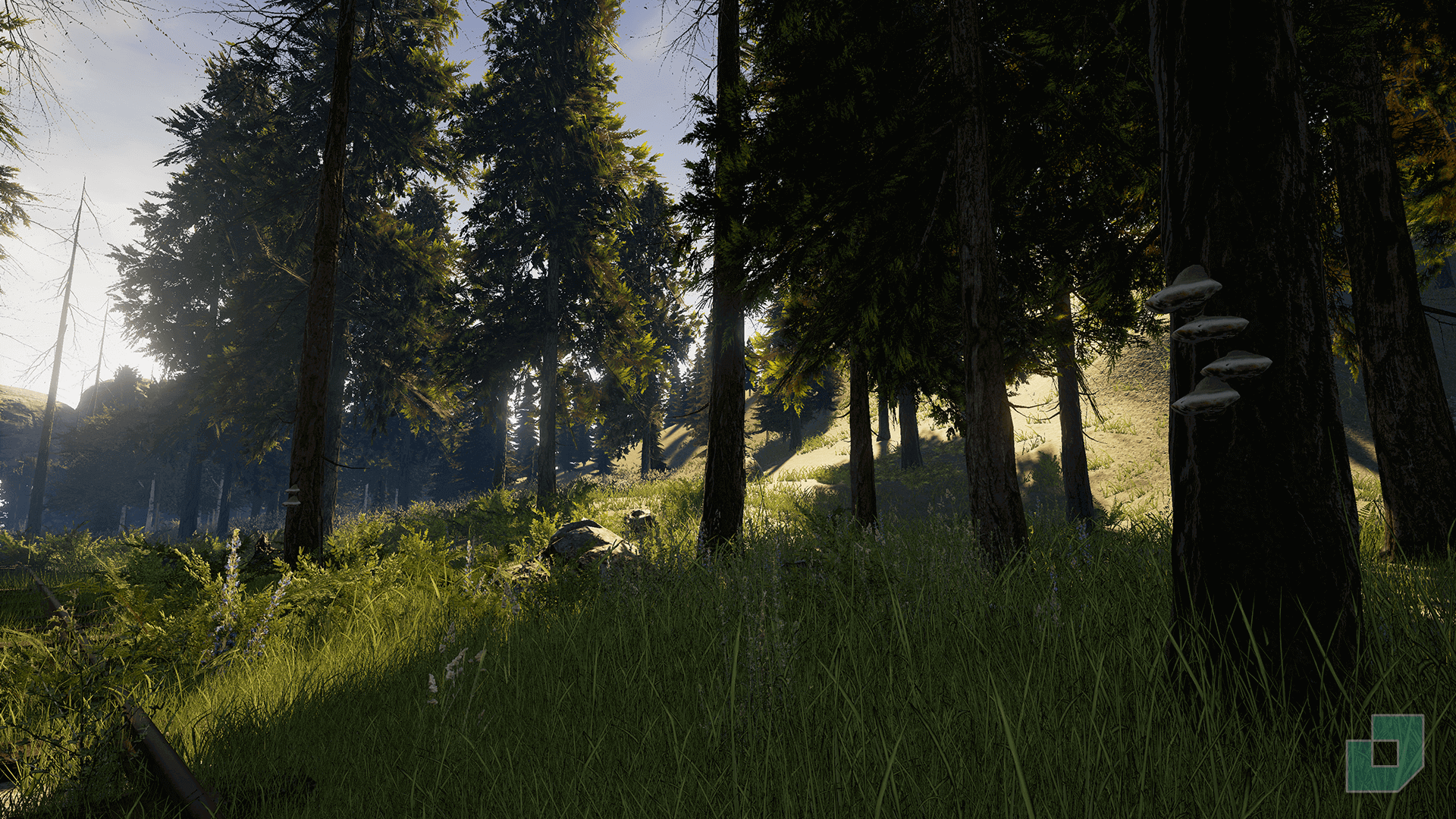 Nulled Forest