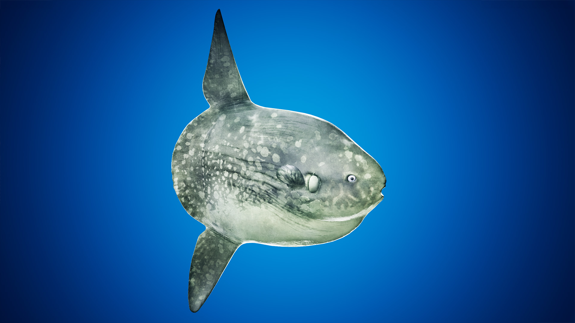 Ocean Animals Pack Vol 2 by Davis3D in Characters - UE4