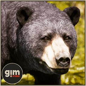 Animated male Black bear with gFur support.