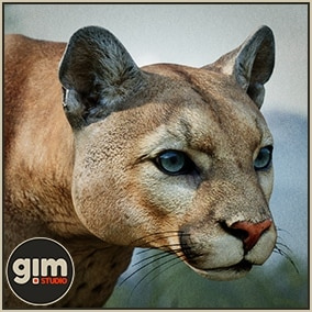 Animated male Cougar with gFur support and bone mesh.