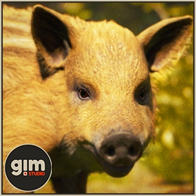 Animated young Wild boar with gFur support.