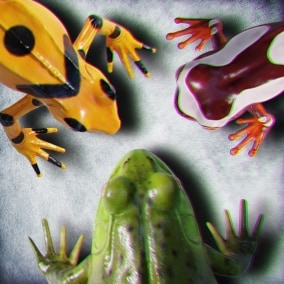 Animated Game Ready Frogs