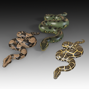 Animated detailed pythons with PBR textures.