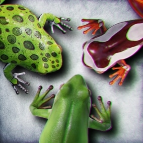 Animated Game Ready Tree Frogs
