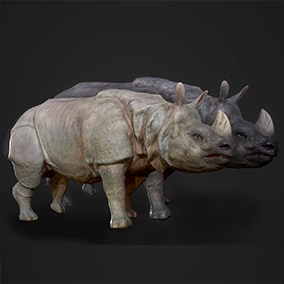 This pack includes animated Indian Rhinoceros ready to populate your savanna environment.