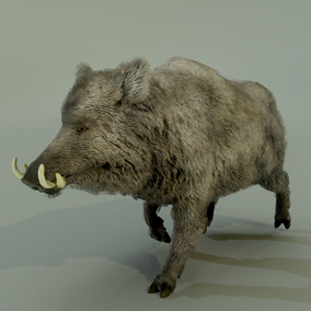 ***included in the Forest Animals Pack***This wonderful boar is an ideal animal to populate your 3D environment and create some natural danger in your project.