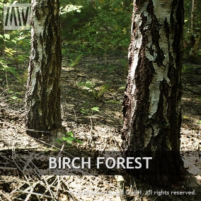 Complete biome solution to build a photorealistic birch forest. Full procedural forest generation or painting. High resolution models and textures of trees, plants, debris and more. Powerful materials and landscape shader, highly tweakable.