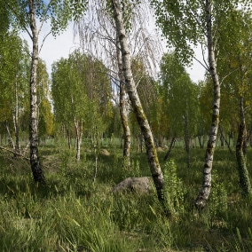 Set to create birch forest.