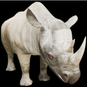 3D model and animations of a Rhinoceros