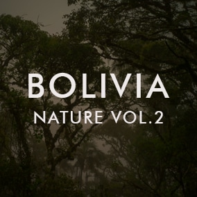 Pristine Ambisonic VR-Ready Bolivia Nature Soundscapes