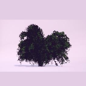 Bushes Gen02_01