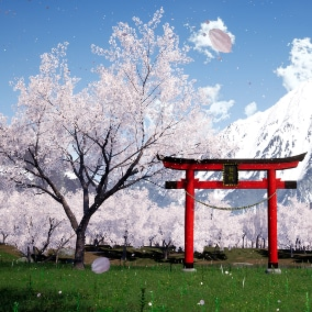 20 different cherry trees with falling pentals (particles) will make you scene look fantastic in no time.