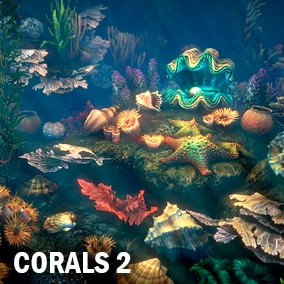 Here you can find a lot of corals, shels, seaweeds and starfishes.