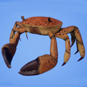 Crab with over 20 animations and 5 different color variations.