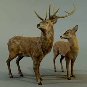 ***Included inside Forest Animals Pack***  In this deer pack you'll find a stag and its doe. They are ready to populate your project requiring forest animals.