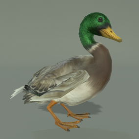 ***Included Inside Birds Pack*** Here is a nice duck ready to populate your environment and enhance the overall feel of your world.