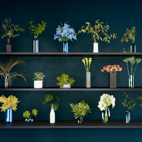 20 highly optimize interior deco plants.