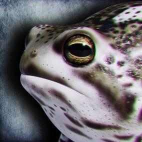 Animated Game Ready Desert Rain Frog