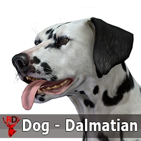 This asset has a realistic DALMATIAN model with 70 IP/RM animations.
