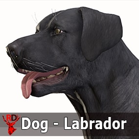 This asset has a realistic LABRADOR model with 74 IP/RM animations.