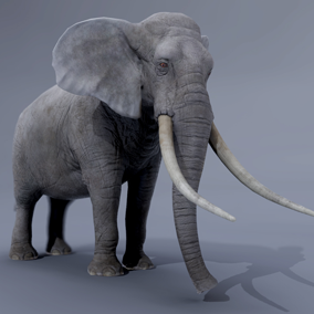 ***Included In African Animals Pack***  Here is a nice African  elephant ready to add to the ambiance of your project. Perfect for jungle or savanna environments