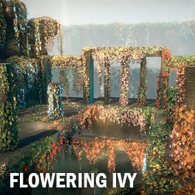 Here you can find a lot of different kind of the ivy both flowering and simple.
