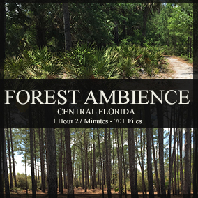 This library contains ambient recordings of some of Central Florida's different forest biomes.