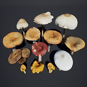 13 photoscanned mushrooms in variety of types and sizes