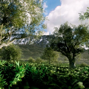 Forest vegetation with low poly count