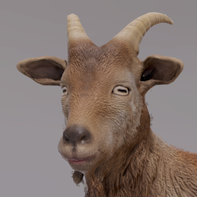 ***Included Inside Farm Animals Pack***This goat will most likely finds its place in a project requiring some farm animals. feel up your farm, barn or fields with it.