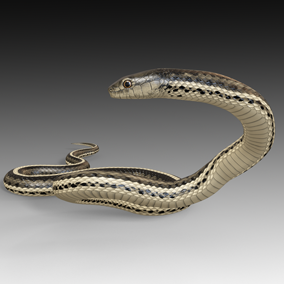 Animated detailed Garter snake with PBR textures.