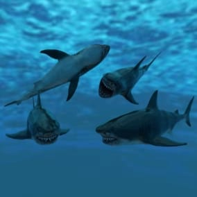 Great White Shark model and 7 animations