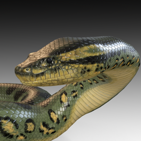 Animated detailed green anaconda with PBR textures.