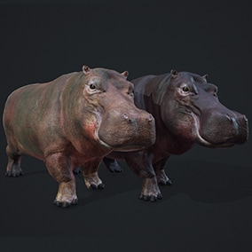 This pack includes animated hippopotamus with 3 skins ready to populate your savanna environment.