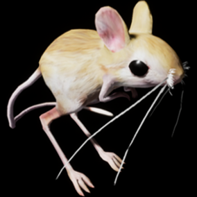 This is a Jerboa's 3D model and animations.