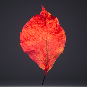 19 Scanned  Leaves With Accurate Meshes And Displacement Maps