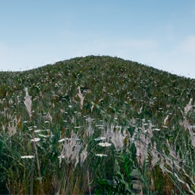 27 animated models of plants and grass