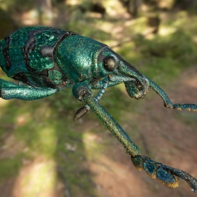 Macroscan - A 3d scan of an actual Weevil insect (Eupholus chevrolati)